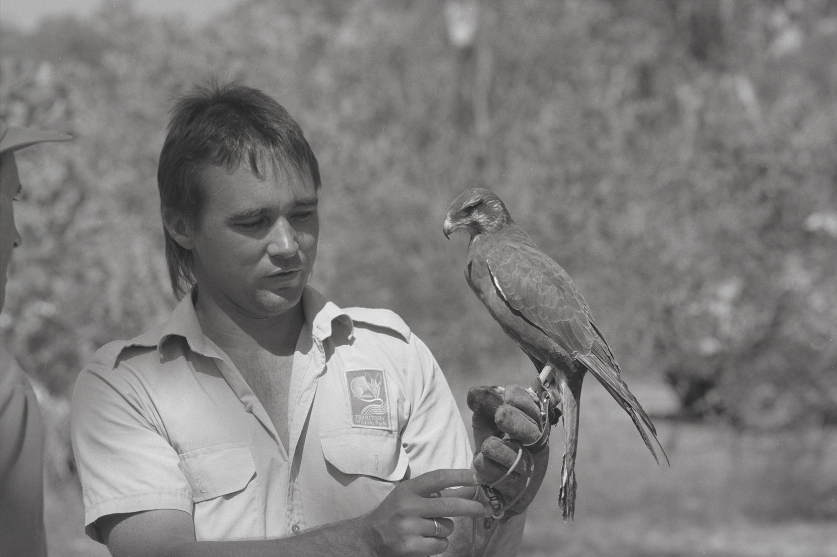 Raptor training at Territory Wildlife Park, Berry Springs, 11 June 1990<br /> Image courtesy of Library & Archives NT,  Department of the Chief Minister, NTRS 3823 P1, Box 11, BW2912, Image 34
