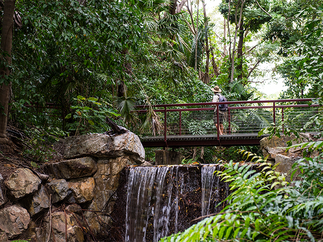 George Brown Darwin Botanic Gardens - Waterfall