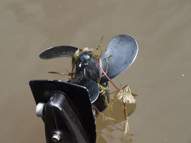 Cabomba spread - outboard propeller