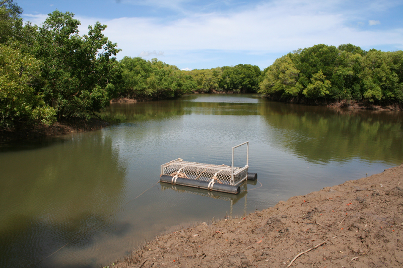 Crocodile trap:</br> Traps are placed in both freshwater and saltwater systems to trap saltwater crocs.
