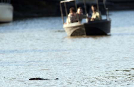 Crocodile patrols: The Crocodile Management Team spot a croc.